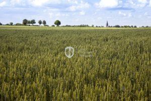 Limburgs land